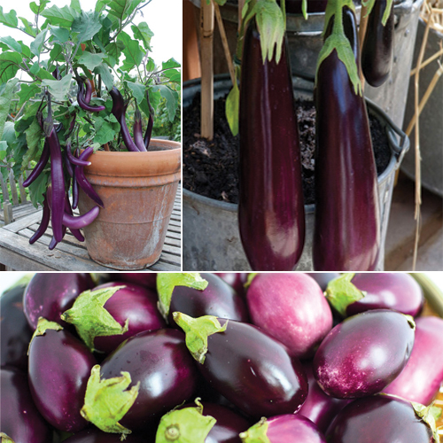 Beginners Guide  10 Easiest Vegetables to Grow in a Pot  10 easiest  vegetables to. Beginners Guide  10 Easiest Vegetables to Grow in a Pot Slide 9