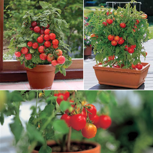 Beginners Guide: 10 Easiest Vegetables To Grow In A Pot, 10 Easiest  Vegetables To