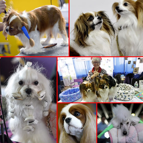 Cute pooches hit the stage at NYFW, cute pooches hit the stage at nyfw,  nyfw,  news york fashion show,  general article,  latest news