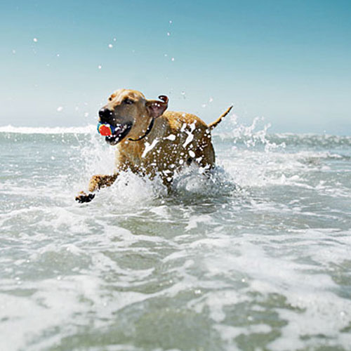 Dog Friendly Beaches , dog friendly beaches, hunting island state park,  south carolina, nags head,  north carolina, fort de soto park paw playground,  tierra verde,  florida, jekyll island,  georgia, dog beach,  ocean beach,  california, pacific city,  oregon,  beaches for dogs to enjoy,  best places for dog to enjoy,  beaches around the world where dogs can enjoy,  beaches where dogs can have fun,  plan your dog's tour,  tour for dogs, beaches where dogs can chill,  places where dogs can chill,  dogs enjoyment places around the world,  fun for dogs,  ifairer,  talk to my paw