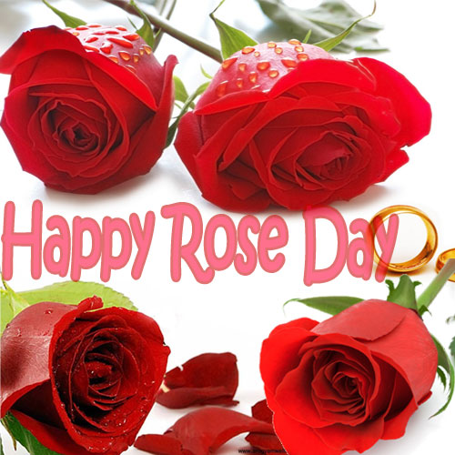 Enjoy Rose Day with fresh thoughts, enjoy rose day with fresh thoughts,  rose day,  7 feb,  general articles,  articles,  how to enjoy rose day,  quotes for rose day,  latest news,  ifairer