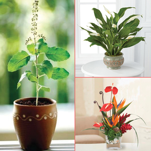 Home decor 8 beautiful plants to grow indoors slide 1 for Home decor with plants