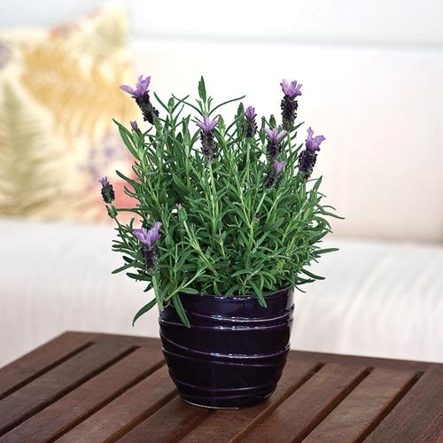 Home Decor: 8 Beautiful plants to grow indoors Slide 7, ifairer.com