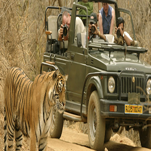 India's Top 6 Safari Parks!, safari,  tiger safari,  top 6 safari parks in india,  indian safari parks,  travel,  destinations,  wildlife safari in india,  tiger safari in india,  ifairer