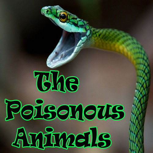 Most Poisonous Animals on Earth, most poisonous animals on earth,  general articles,  articles,  latest news,  ifairer