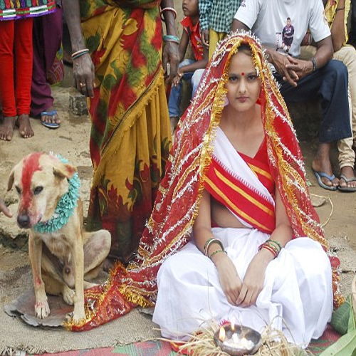 OMG! Indian Girl Marries A Dog, dog,  marriage with a dog,  indian girl marries a dog,  street dog,  girl,  indian girl,  marriage,  mangli munda,  jharkhand,  ifairer