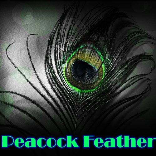 Significance of Peacock Feather, significance of peacock feather,  astrology,  numerology,  zodiac,  latest news,  ifairer