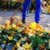 5 Tips for Gardening In Monsoon