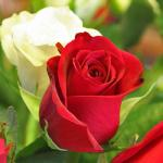 Romantic flowers to grow at your home