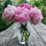 Flowers to grow at your home to get romantic