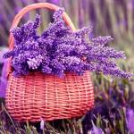 Fragrant plants for home that purify air naturally