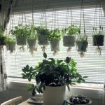 Freshen your kitchen space with plants