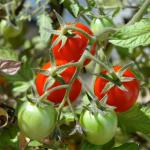 Healthy veggies and herbs to grow in garden