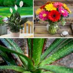 Air purifying plants to grow in your house