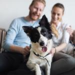 Study: Household pollutants cause infertility in both men and dogs