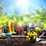 5 Vastu tips to attract good fortune with a garden at home