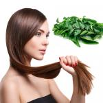Hair care: Curry leaf mask to prevent premature greying