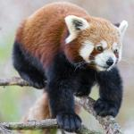 12 Rarest Animals You Probably Don`t Know About