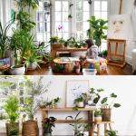 4 Indoor Plants That Are Also Easy To Maintain