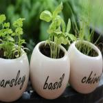 5 herbs you can grow in your apartment!!