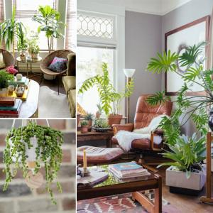 Choosing the best indoor plants for your interior