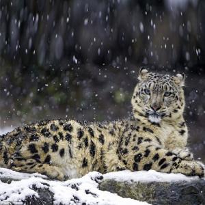 The world's rarest animals