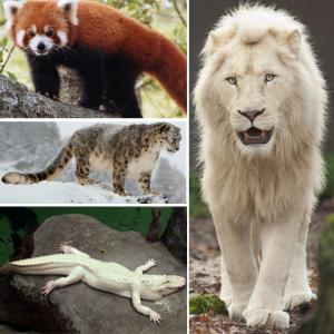 Extremely rare animals on Earth that people would be lucky to see once
