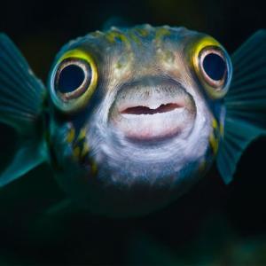 Fish Can See Color in Deep, Dark Ocean, Study