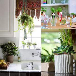 4 Indoor plants for home decor, keep you healthy also