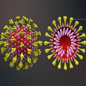 Scientists discover tiny antibody that completely neutralises novel coronavirus