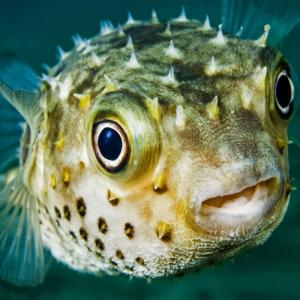 7 Scary and creepy animals in the world