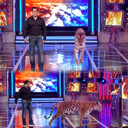 Tiger on the set of Big Boss , tiger on the set of big boss,  bollywood news,  bollywood gossips,  latest news,  big boss,  latest news,  salman khan,  ifairer