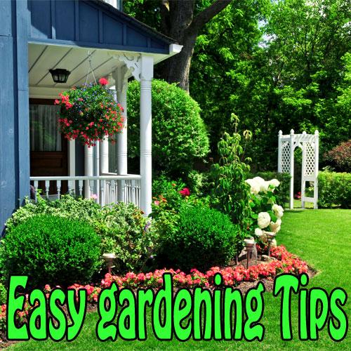 10 Vegetables Eat Once And Regrow Forever Slide 1 Ifairer Com: Tips To Improve Your Garden Easily Slide 1, Ifairer.com