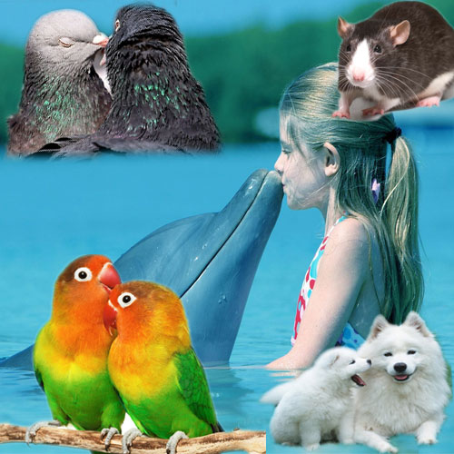 Top 9 intelligent animals in the world , top 9 intelligent animals in the world,  top 9 most intelligent animals in the world,  smartest animals on earth,  intelligent animals,  general articles,  ifairer
