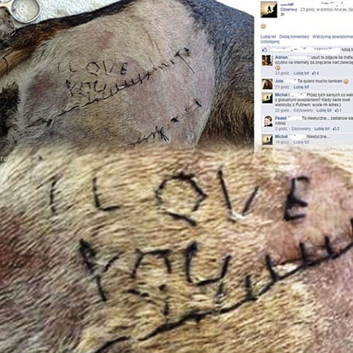 Vet student stitched 'I love You' into Dog, vet student stitched i love you into dog,  veterinarian,  latest news,  ifairer,  general article,  article