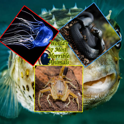 World`s 7 most horrible animals, worlds 7 most horrible animals,  most dangerous animals in the world,  7 top most horrible animals in the world,  general articles,  ifairer
